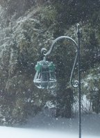 Frozen Feeder